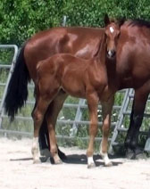 Harpo MG (Carlton Hill x Farrington x Goodtimes)