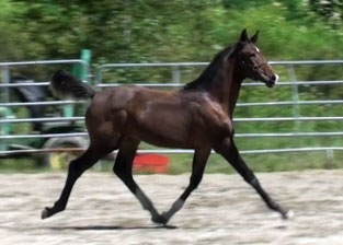 Galileo MG (Schroeder x Goodtimes)
